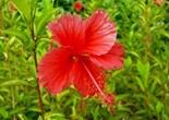 flower_183459