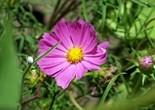 flower_197003
