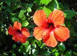 flower_flora_nature