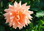 flower_nature_garden