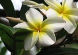 flower_white_flower_yellow_flower