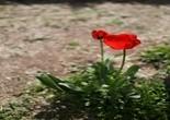 spring_flowers_flower